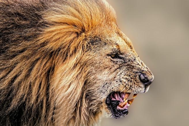 lion-1745289_1280